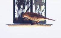 a_little_bird_once_told_me_by_foxsilong-d96g2sv