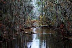 grey_cloud_swamp_by_foxsilong-d8s6dnc