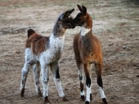 greystone_ranch_by_foxsilong-d86ytka