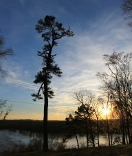 stand_alone_pine_by_foxsilong-d962uij