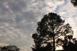 sun_set_by_foxsilong-d63lvv1