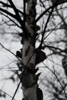 tree_bark_by_foxsilong-d73rhio