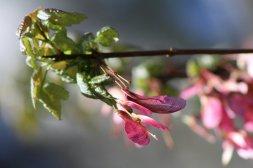 flower_by_foxsilong-d8xsxb4